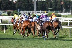 Istanbul Horse Race Royalty Free Stock Photo