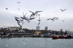 Istanbul, Kadikoy dancing seagulls on the pier Royalty Free Stock Images