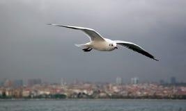 Istanbul-Marinelebensdauer lizenzfreie stockbilder