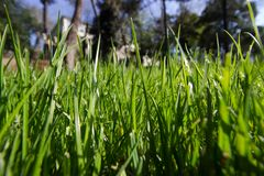 Spring Time for Istanbul April 2019, Grassy Field, Bright and Sunny Day. royalty free stock photo