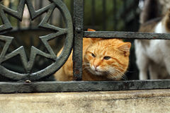 Istanbul-streunende Katze Stockbild