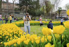 Istanbul Tulip Festival. Seasonal tulip festivals celebrated in. Istanbul, Turkey - April 6, 2013: Tulip flowers with the symbols of Istanbul, Istanbul's Stock Photo