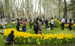 Istanbul Tulip Festival. Seasonal tulip festivals celebrated in. Istanbul, Turkey - April 6, 2013: Tulip flowers with the symbols of Istanbul, Istanbul's Stock Images