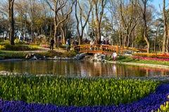 Tulip Gardens in Emirgan Parc Royalty Free Stock Photos