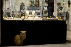 ISTANBUL, TURKEY - DECEMBER 28, 2015: Ginger cat in front of a Jewelry store in the Grand Bazaar Royalty Free Stock Photography