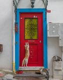 The city of cats, Istanbul. Turkey royalty free stock images