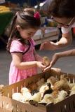 Little girl admires chicks in bazaar. Istanbul, Turkey - Mar 31, 2016: Little girl admires chicks in bazaar at Tarihi Sali Pazari Stock Photos