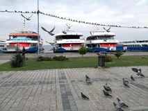 Birds and ships in the island of princesses Buyukada royalty free stock photography
