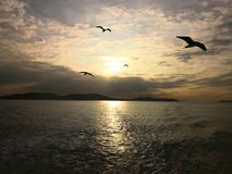 Sea of Marmara and Seagulls at sunset royalty free stock photo