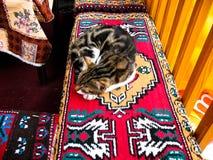 Istanbul Turkiet - katt som ligger på en matta Arkivfoton