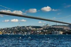 Istanbul Turkiet 12-November-2018 Fåglar som flyger ovanför den Bosphorus floden, den Ortakoy bron och moské royaltyfria bilder