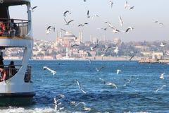 Istanbul Turkiet seagulls som flyger runt om den offentliga färjan Royaltyfri Bild