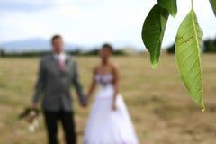 Istantanea di nozze Fotografie Stock Libere da Diritti