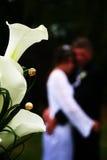 Istantanea di nozze Fotografia Stock Libera da Diritti