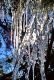 Istappar i en cederträbuske Abstrakta naturliga modeller som skapas av vatten och ljus Arkivfoto