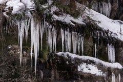 Istappar i skogen Royaltyfri Bild