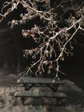 Istappar på träd ovanför dold picknickbänk för snö på natten arkivbilder