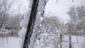 Istappar på trädet smälter, en droppe av vatten lager videofilmer