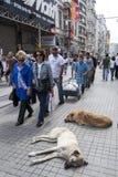 Istiklal Caddesi no subúrbio de Taksim de Istambul, Turquia Imagem de Stock