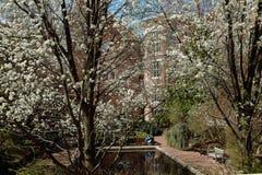 Istituto universitario Lily Pond, Brooklyn New York U.S.A. 2014 di Brooklyn Immagini Stock