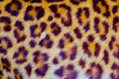 Istna jaguar sk?ra obrazy royalty free
