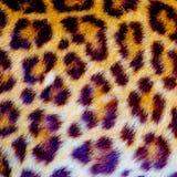 Istna jaguar sk?ra zdjęcia stock