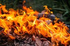 Istnego ogienia tło Zdjęcie Royalty Free
