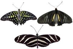 Istni motyle oddzielają na białym tle - set 05 Fotografia Royalty Free