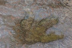 Istny dinosaura odcisku stopy inThailand Zdjęcie Stock