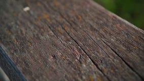 Istny Stary Drewniany tekstura rocznika t?o Stara plakieta zakrywająca z malującą farbą zamkniętą w górę zdjęcie wideo