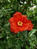 Isto é a flor bonita fotos de stock