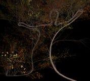 Istota ludzka kształtował drzewnego dorośnięcie w spadku 3d ilustraci Zdjęcie Stock