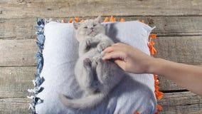 Istota ludzka pieści figlarki na poduszce zbiory