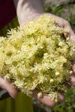 Istota ludzka wręcza mienie rośliny Zdjęcie Royalty Free