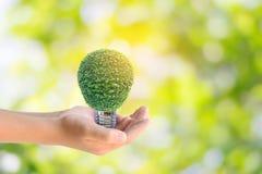 Istota ludzka wręcza trzymać energooszczędną lampę drzewo Fotografia Stock