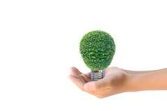 Istota ludzka wręcza trzymać energooszczędną lampę drzewo Zdjęcia Royalty Free