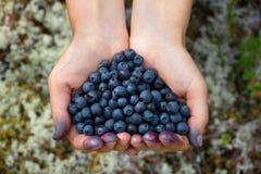 Istota ludzka wręcza trzymać garść czarne jagody w formie h Zdjęcia Royalty Free