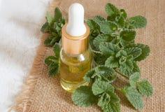 Istotny aromatyczny olej z mennic? na drewnianym tle Selekcyjna ostro?? fotografia stock