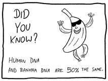 Istoty ludzkiej DNA ilustracja wektor