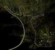 Istoty ludzkiej dorośnięcia 3d kształtna drzewna ilustracja Zdjęcia Royalty Free