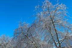 Isträd i vintern, körsbärsröda träd för is i vinter efter regn royaltyfri bild