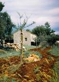 Istria landskap av Kroatien royaltyfri foto
