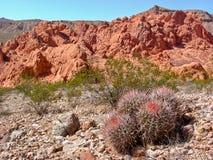 Istrice e rocce rosse immagini stock
