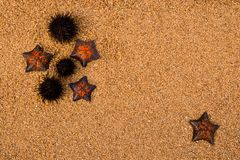 Istrici e starfich Fotografia Stock