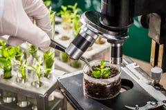 Istruisca il laboratorio che esplora i nuovi metodi di allevamento vegetale fotografia stock libera da diritti
