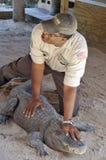 Istruttore dell'alligatore Immagini Stock