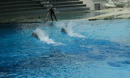 Istruttori del delfino Fotografie Stock Libere da Diritti