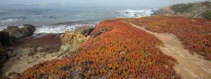 Isväxt på rättfram slinga på den ojämna centrala Kalifornien kustlinjen på Cambria Kalifornien USA fotografering för bildbyråer