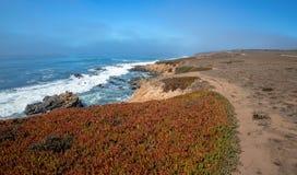 Isväxt på rättfram slinga på den ojämna centrala Kalifornien kustlinjen på Cambria Kalifornien USA royaltyfria foton