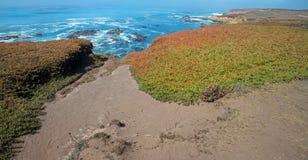 Isväxt på rättfram slinga på den ojämna centrala Kalifornien kustlinjen på Cambria Kalifornien USA royaltyfri fotografi